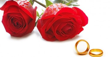 844361__wedding-rings1_p