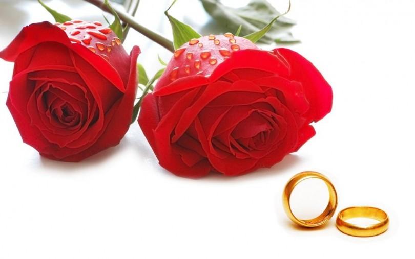844361__wedding-rings1_p